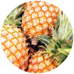 fruitytag2.jpg